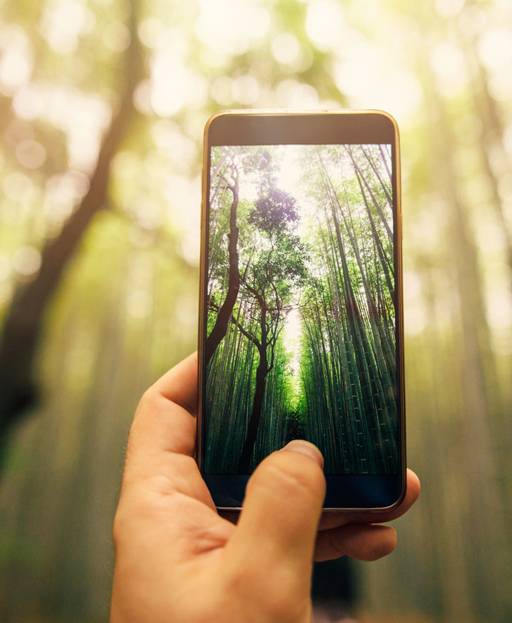 smartphone with picture of trees