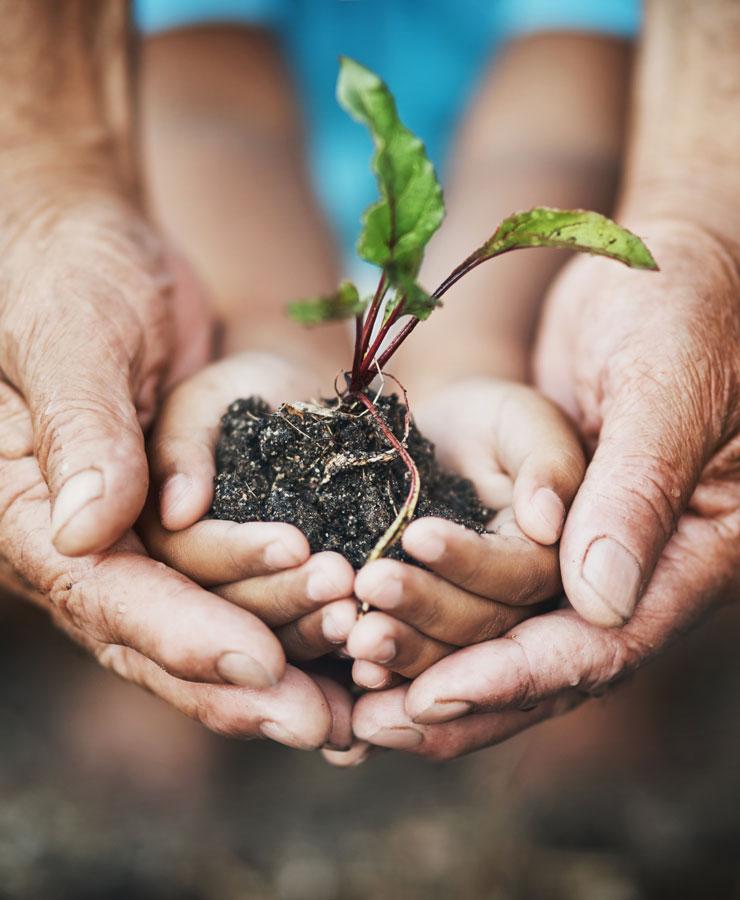 Handen houden plantje vast